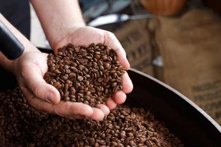 roasting: Hand removing coffee beans from the burlap bag Stock Photo