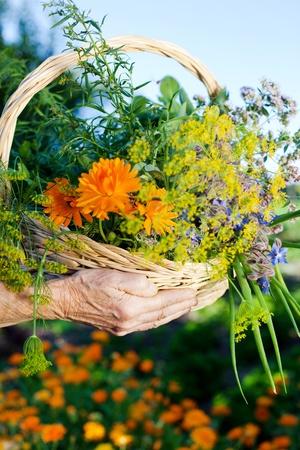 floral arrangements: Senior hand holding a basket of flower in a close up shot