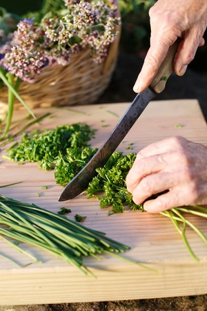 Human hands cutting organic herbs from the garden photo