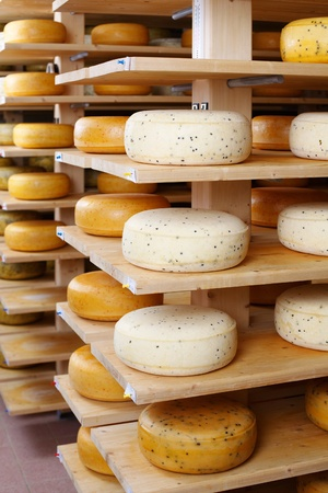 maturing: Young and mature cheese-wheels aging on shelves at the cellar of the cheesemaker shop