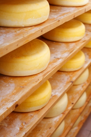 Shelves filled with traditional cheese-wheelsShelves filled with many traditional cheese-wheels at the cheesemaker shop photo