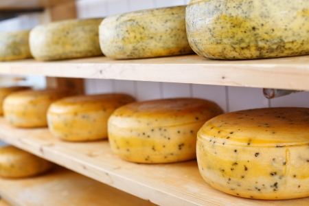 rack wheel: Many matured cheeses on shelvesMany matured cheeses on displayed on shelves at the cheesemaker store