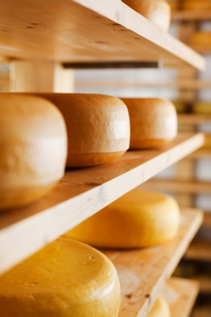 maturing: Cheese-wheels maturing on different shelves at the cheesemaker cellar Stock Photo
