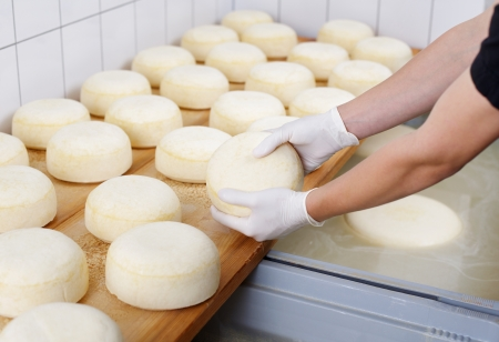 latex glove: Ripening domestic cheese at the cheese dairy