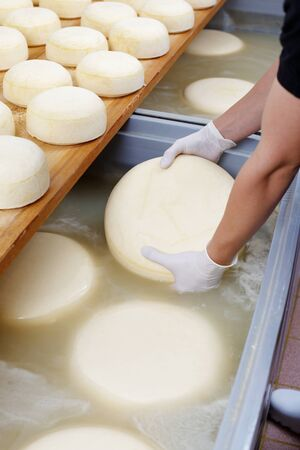 food hygiene: Production line machinery processing freshly fermented cheese