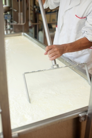 fermenting: The employee in Cheese factory moving fermenting milk