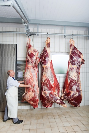 A butcher checking the peeled body of a cow hanging on a hook Stock Photo