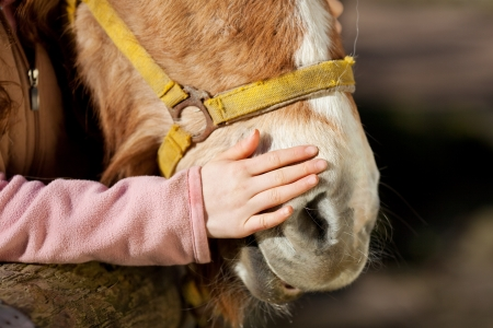 Hand of a young girl stroking her pony on the nose in a show of love and affection Banco de Imagens