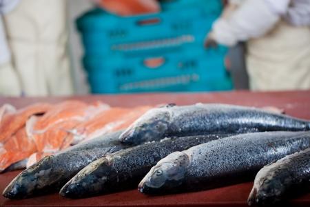 fischerei: frischen Fisch in Fischgeschäft mit den Arbeitern im Hintergrund