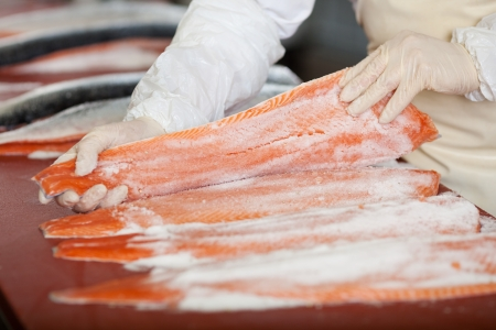 worker with gloves applying salt on salmon fillets at fish store photo
