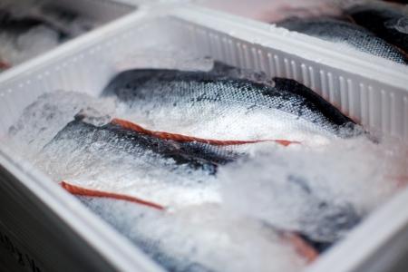 Saumons ensemble se trouvant sur la glace dans une boîte de transport Banque d'images - 21213119
