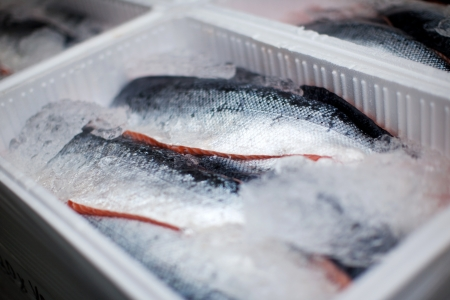 whole salmons lying on ice in a transportation box