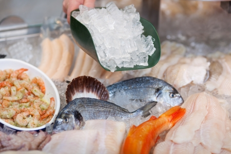 sparus: salesperson filling ice on fresh fish at market