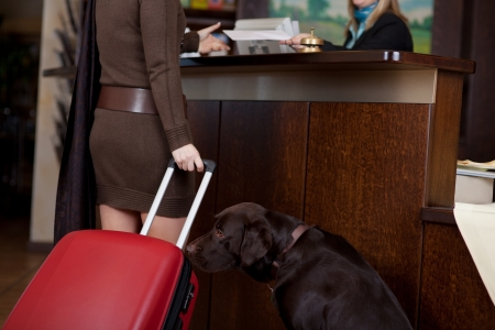 hotel receptionist: female guest with dog and baggage at hotel reception