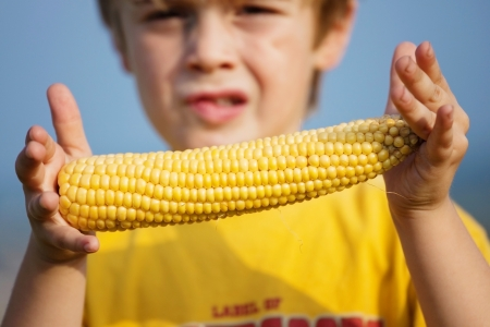 kids holding hands: Close up shot of young boy holding a sweet corn on the cob