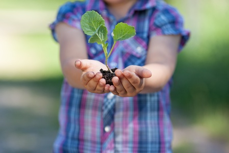 Conceptual portrait of little plant holding by the young girl photo