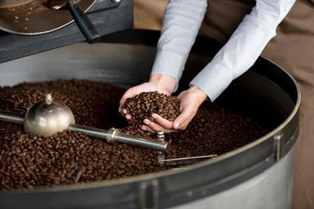 semilla de cafe: vista de primer plano de los granos de caf� tostado en la mano de la mujer Foto de archivo