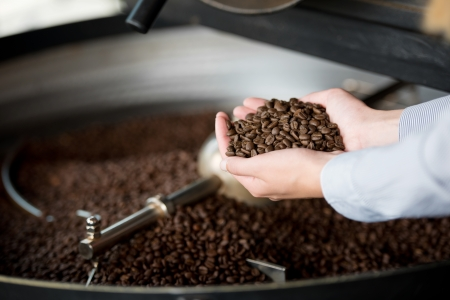 roaster: Cropped image of cooling container and waitresss hands holding coffee beans
