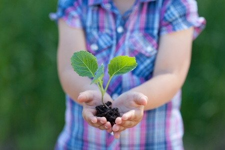 Conceptual portrait of child hands holding a little plant photo