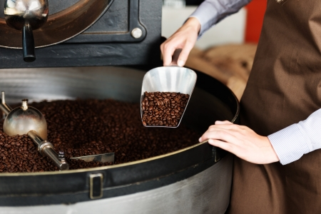 roasting: woman taking roasted coffeebeans from the roast machine