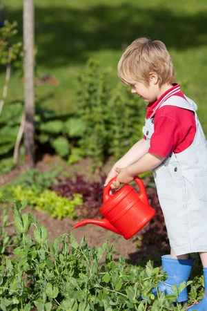 Cute little boy watering plants in garden photo