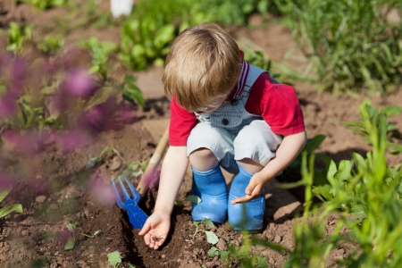 Boy is putting seeds in the soil in the vegetable garden photo