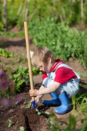 crouched: Little boy is planting small plants in the garden