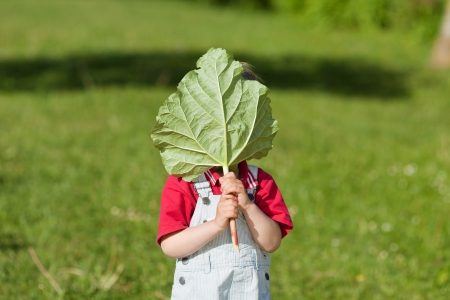 obscured face: Little boy holding leaf in front of face while standing in yard Stock Photo