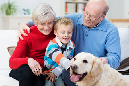 Grandparent s with their young grandson and loyal golden retriever dog sitting together in the living room as the little boy reaches out to stroke the dog photo
