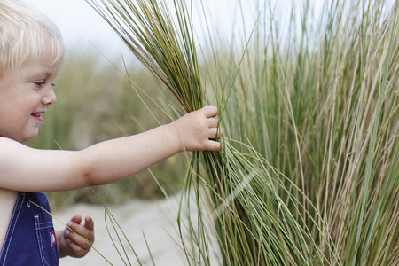 explores: Cute small boy with blond hair holding a handful of wild coastal grass in his hand as he explores at the beach Stock Photo