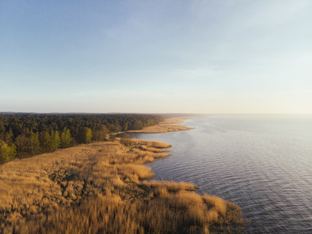 Coastal wetlands with golden grass and reeds bordering a quiet lake or ocean with inland forests of dense green trees