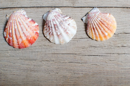 sea shell on wood , seashell on wooden background