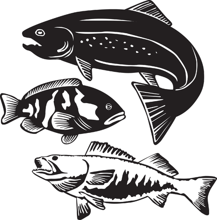 trout fishing: fish vector Illustration