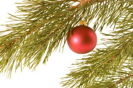Red christmas ball on fir banch photo