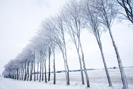 Row of frozen trees Stock Photo