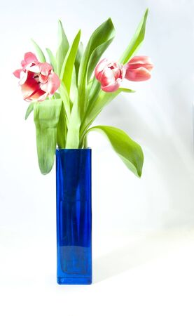 pink tulips in vase on white ground photo