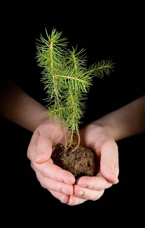 hand holding plant: Fir in human hands on black ground