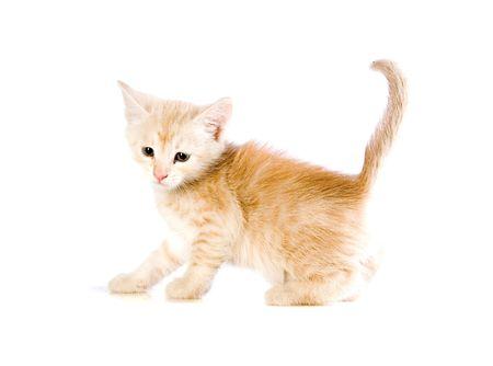 Small red kitten on white ground Stock Photo - 4882956