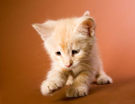 Small red kitten plaing with something Stock Photo - 4882941