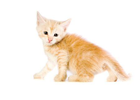 Homeless red kitten on white ground Stock Photo - 4914743