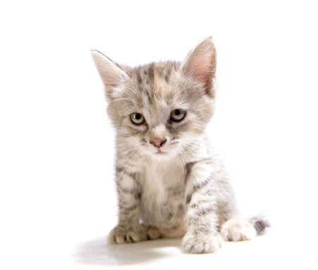 Small gray kitten on white ground Stock Photo - 4914730
