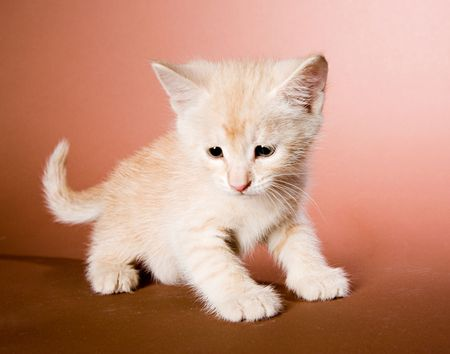 Cute red kitten on brown ground Stock Photo - 4914734