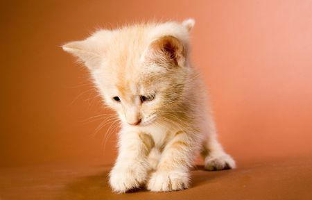 Cute red kitten playing with smth Stock Photo - 4914733