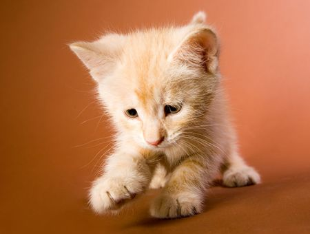 Small red kitten plaing with something Stock Photo - 4953428