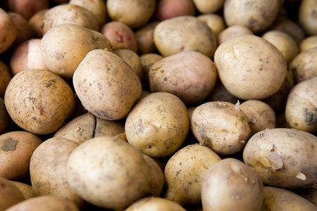 background of heap of young potatoes photo