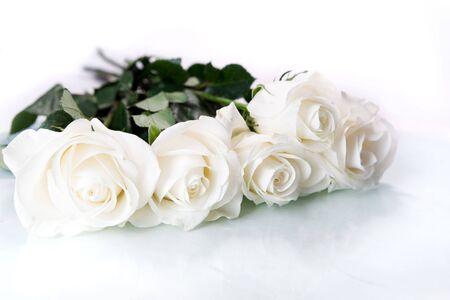 floral arrangement: White roses on white ground Stock Photo