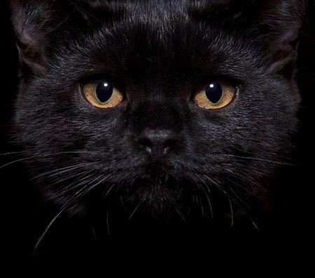 Close-up shot of a black cat with orange eyes photo