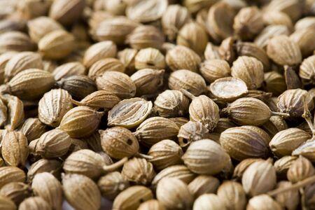 background brown of coriander seeds  photo