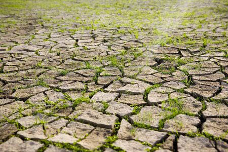 flat earth: Dry mud field with young green grass Stock Photo