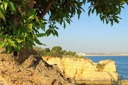Three Layers: Close up Tree near the coast, with cliff and far away villages as background